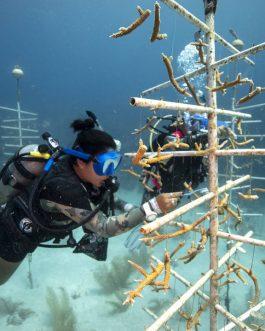 Conservation Dive
