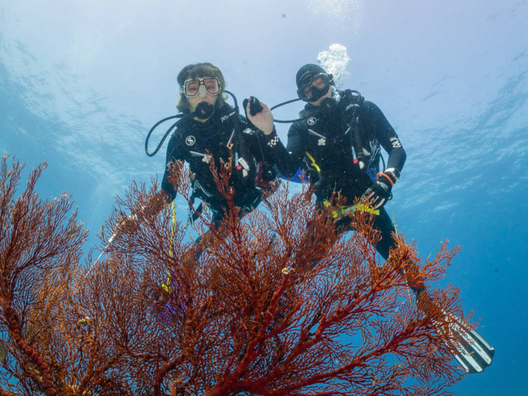 Read more about the article Top 10 Island to dive in Malaysia